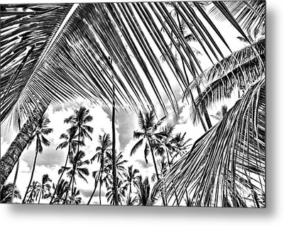Metal Print featuring the photograph The Tropics by DJ Florek