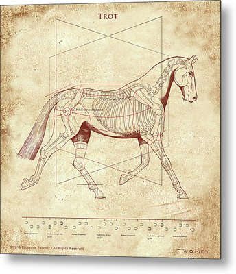The Trot - The Horse's Trot Revealed Metal Print by Catherine Twomey