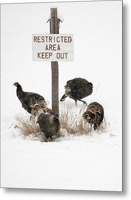 The Turkey Patrol Metal Print
