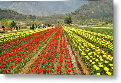 The Valley Blooms Metal Print by Fotosas Photography