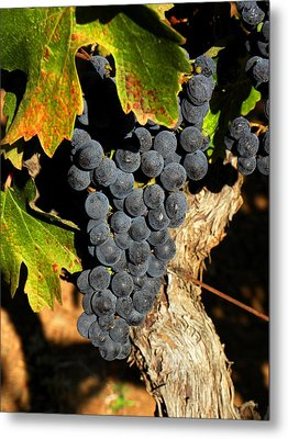 The Vineyard One Metal Print