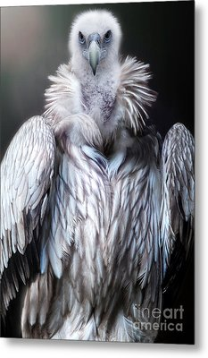 The Vulture Metal Print