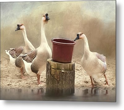 Metal Print featuring the photograph The Watering Hole by Robin-Lee Vieira