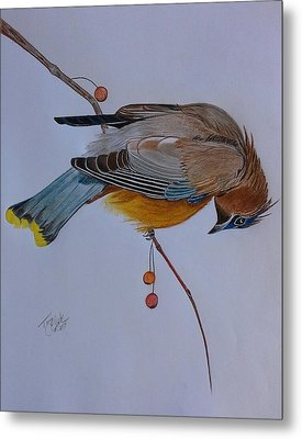 The Waxwing  Metal Print