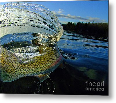 The Way Of The Trout Metal Print by Brian Pelkey