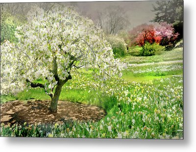 Metal Print featuring the photograph The White Canopy by Diana Angstadt