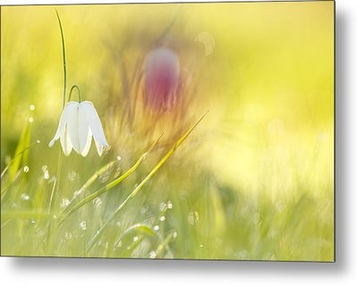The White Queen Metal Print by Roeselien Raimond