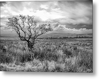 The Windswept Tree Metal Print
