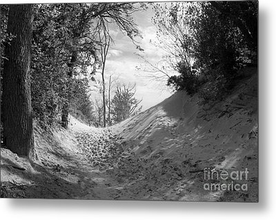The Windy Path Metal Print by Cathy  Beharriell