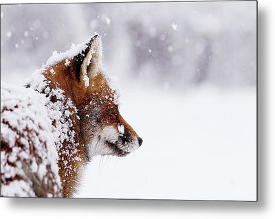 The Winterwatcher - Red Fox In The Snow Metal Print