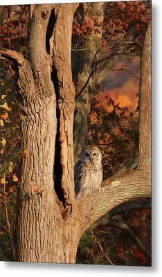 The Wise Owl Metal Print by Lori Deiter