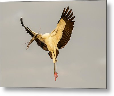 The Wood Stork Angel Metal Print