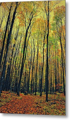 The Woods In The North Metal Print by Michelle Calkins