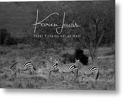 Metal Print featuring the photograph The Zebra Tree by Karen Lewis