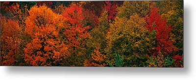 These Shows The Autumn Colors Metal Print by Panoramic Images
