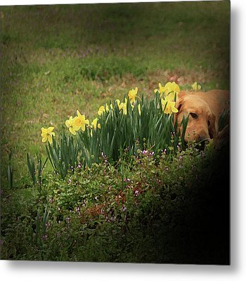 Thinking Spot Metal Print by Kim Henderson