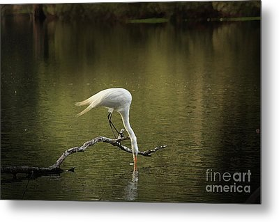 Metal Print featuring the photograph Thirst by Kim Henderson
