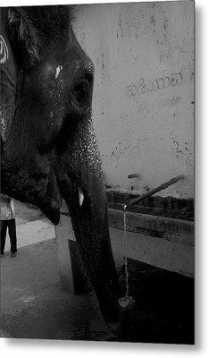 Thirsty Elephant Metal Print by Deepak Pawar