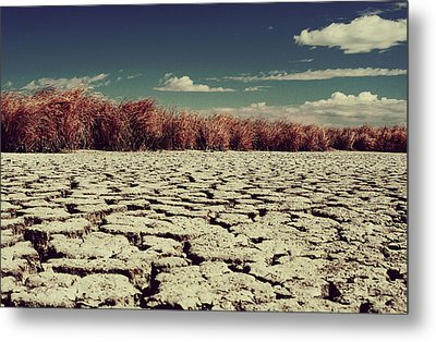 Thirsty Metal Print by Laurie Search