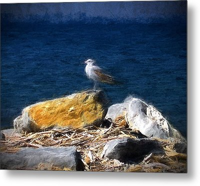 This Gull Has Flown Metal Print by John Freidenberg