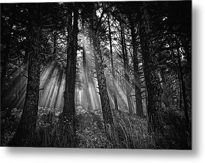 This Is Our World - No.1 - Forest Floor Morning Mist Bw Metal Print by Paul W Sharpe Aka Wizard of Wonders