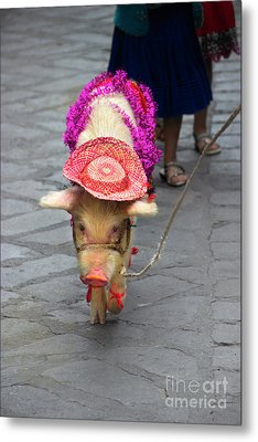 This Little Piggy Went To The Market Metal Print