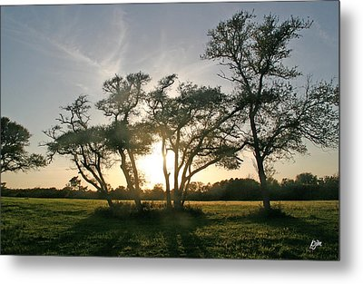Metal Print featuring the photograph This One Is For You by Phil Mancuso