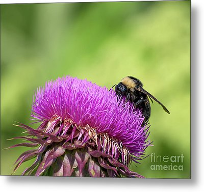 Thistle And Bee Metal Print