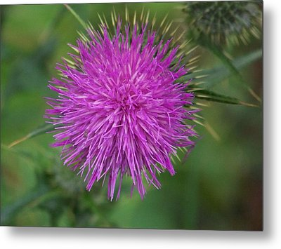 Metal Print featuring the photograph Thistle by Angi Parks