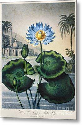Thornton: Water Lily Metal Print