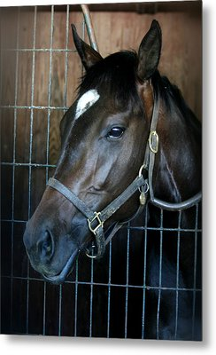Thoroughbred Metal Print