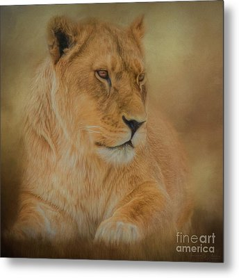 Thoughtful Lioness - Square Metal Print