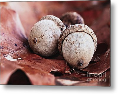 Metal Print featuring the photograph Three Acorns And Autumn Oak Leaves by Stephanie Frey