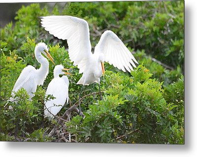 Three Birds Of A Feather Flock Together Metal Print by Patricia Twardzik