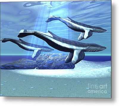 Three Blue Whales Move Metal Print by Corey Ford