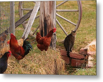Three Chickens And A Cat Metal Print