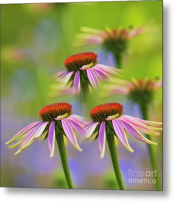 Three Coneflowers Metal Print by Veikko Suikkanen