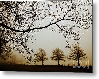 Metal Print featuring the photograph Three Cypress In The Mist by Iris Greenwell