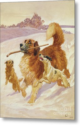 Three Dogs Playing In The Snow Metal Print