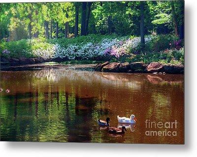 Three Ducks At The Azalea Pond Metal Print by Tamyra Ayles