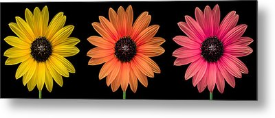 Three Flowers Metal Print by Hudson Marsh