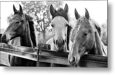 Three Horses Metal Print by Brian Foxx