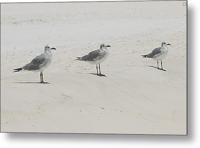 Three In A Row Metal Print by Beverly Hammond