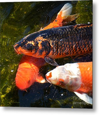 Three Koi Waiting Metal Print