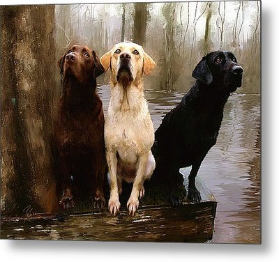 Metal Print featuring the painting Three Labs by Robert Smith