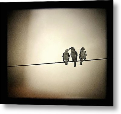 Three Little Birds Metal Print by Trish Mistric