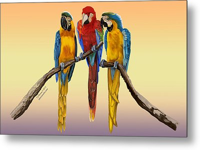 Three Macaws Hanging Out Metal Print