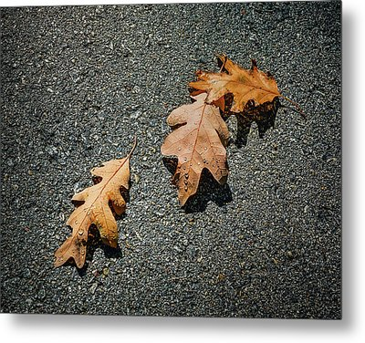 Three Oak Leaves Metal Print