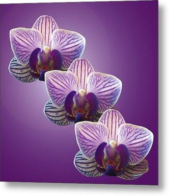 Three Orchids Metal Print