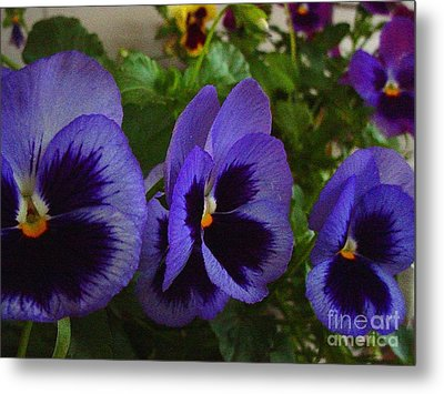 Three Pansys Metal Print by Karen Wallace